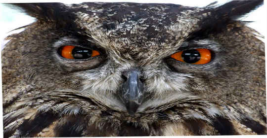 owl-fashion-trend